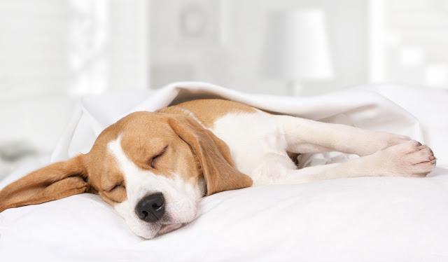 質の良い睡眠には品質の良い布団を!西川のセールが狙い目