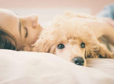 ペットと一緒に暮らすなら「ラムース生地」のソファ