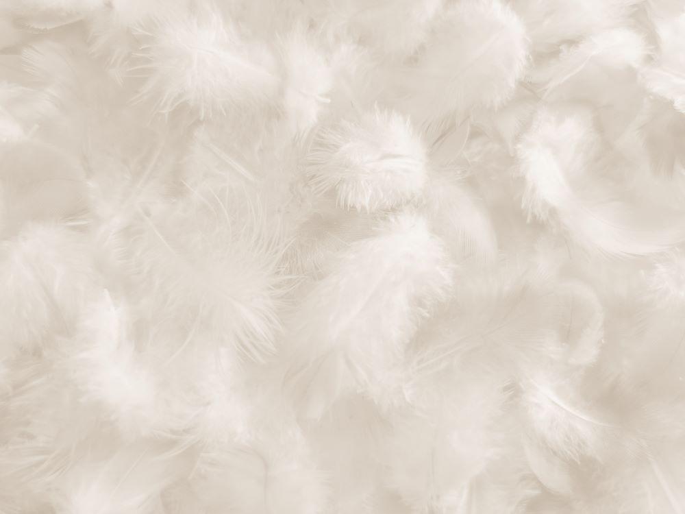 羽毛布団の品質